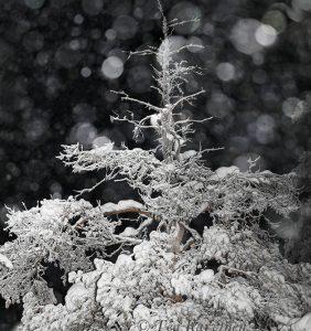 photo of the week 7 – Snowing in Ylläs region