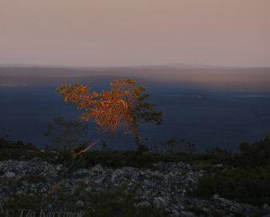 photo of the week 26 – On the slopes of Noitatunturi fell in Pyhä-Luosto National Park