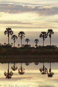 1294 – Okavango, Botswana
