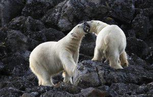 1926 – Svalbard (Spitzbergen)