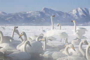 2732 (Lake Kussharo)