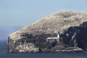4814 – An island covered with birds, Scotland