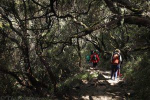 646 – Madeira, levada walk