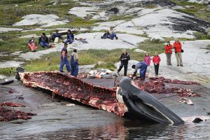 7141 – A finwhale in Greenland