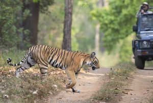 7742 – Kanha National Park, India