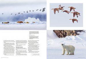 Nunavut_MKuvalehti-4