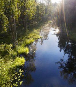 photo of the week 33 – Liesijoki at Seitseminen National Park