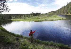 1205 – Fly fishing in Kuusinki river, Kuusamo