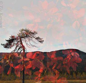 photo of the week 38 – Pyhätunturi fell area in Pyhä-Luosto National Park