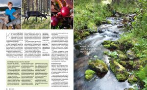 ET – Pallas-Yllästunturin kansallispuisto s2 –– Teksti: Leena Filpus