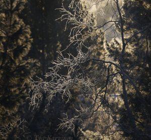 photo of the week 44 – Trees seen through my window
