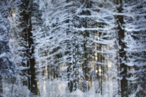 5049 – A double exposure