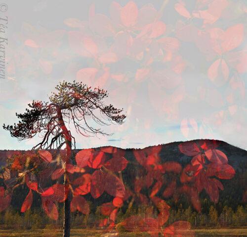 3076-3077 – Tunturiaapa swamp area and the Pyhä fells