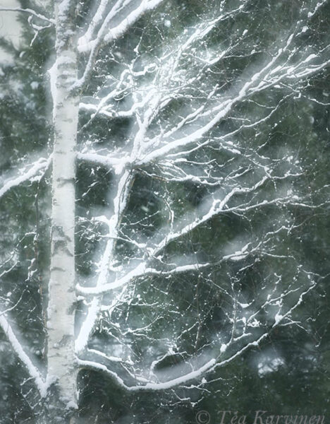 photo of the week 10 – A view (a tree) from my window. This is a double exposure.