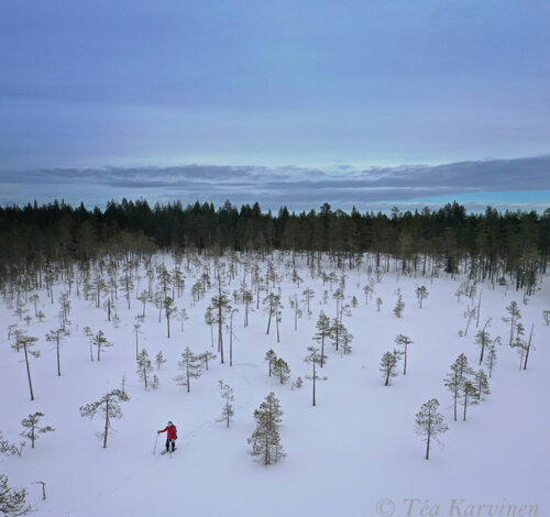 photo of the week 11 – A panorama drone photo of myself (no other people around) in Ounasvaara, Rovaniemi