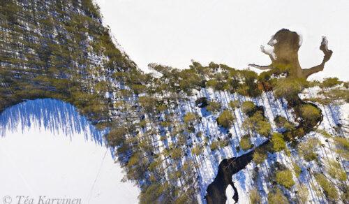 162-164 – Hossa National Park (Muikkupuro)