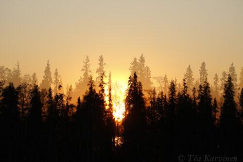 5869 – Sokanaapa (an aapa mire) in Pelkosenniemi, Lapland at midnight in the beginning of June.