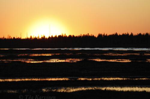 5956 – Sokanaapa (an aapa mire) in Pelkosenniemi, Lapland at midnight in the beginning of June.
