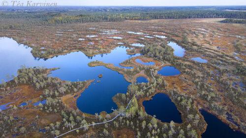 62-63 – Kauhaneva-Pohjankangas National Park