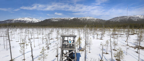 781-783  – Tunturiaapa swamp area in Pyhä-Luosto National Park in May 13th, 2021