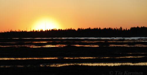 photo of the week 22 – Luiro swamp area