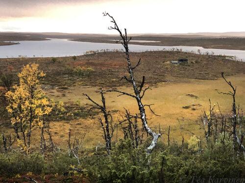 4161 – HIking 75 km Sevettijärvi (Inari) – Pulmankijärvi (Utsjoki) in Kaldoaivi wilderness area.
