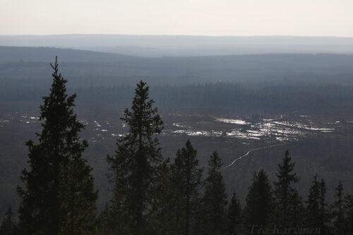 8754 – Hyöteikönsuo swamp area next to the Näränkä Natural Forests
